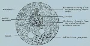 Схема ячейки