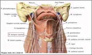 Повреждение нерва гортани