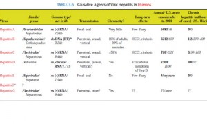 Краткая харрактеристика вируса гепатита